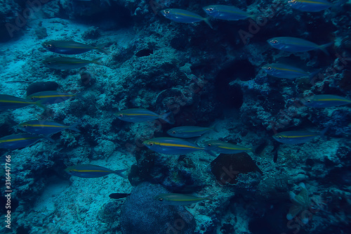 scad jamb under water / sea ecosystem, large school of fish on a blue background Tapéta, Fotótapéta