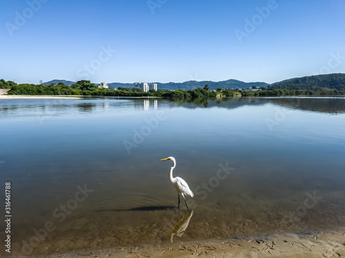 White and elegant herons live in the lagoons and beaches of the region, flying and resting in Niterói, Rio de Janeiro, Brazil Wallpaper Mural
