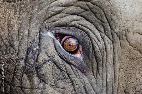 Obraz eye of an elephant - fototapety do salonu