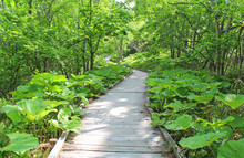 釧路湿原国立公園 湿...
