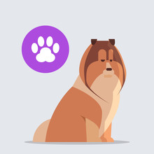 Cute Scottish Collie Dog With Chat Bubble Speech Furry Human Friend Home Pet Concept Cartoon Animal Full Length Vector Illustration