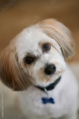 Cute dog poses for a photo Canvas Print