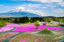 富士山と麓に広がる芝...