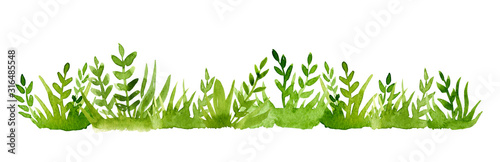 Obraz Watercolor green grass isolated on white background. - fototapety do salonu