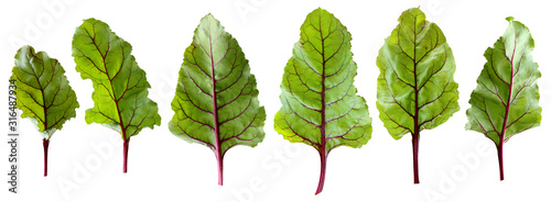 Obraz na plátně beet tops, isolated leaves on a white background with clipping path