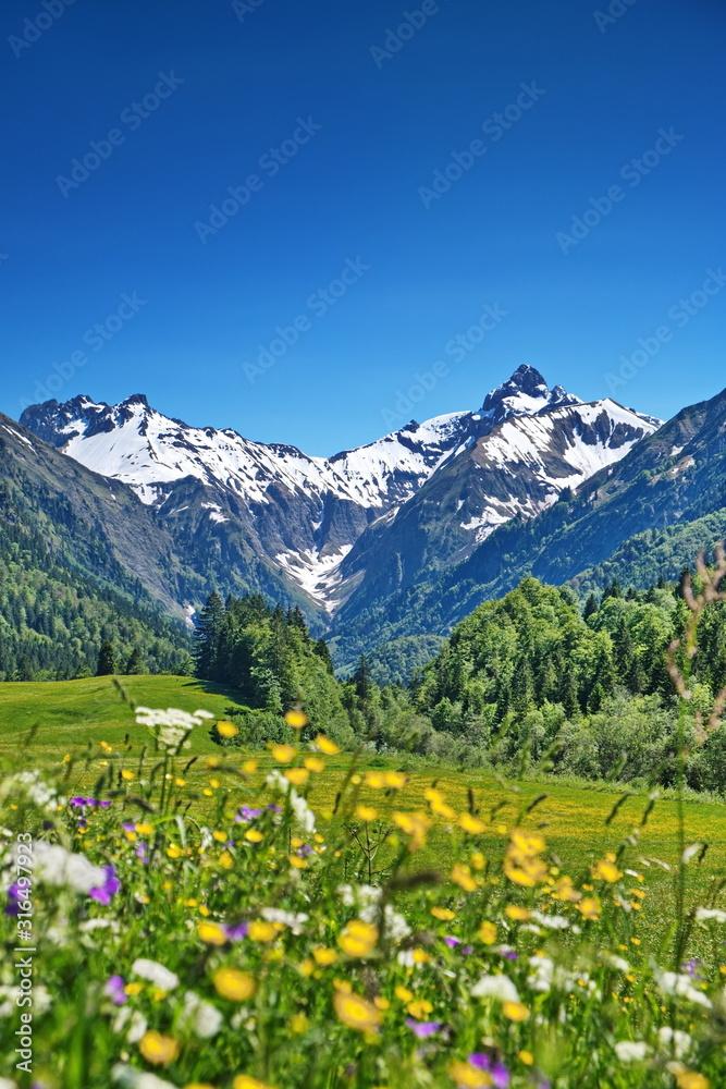 Fototapeta Alpen, Blumenwiese in den Bergen mit Schnee auf Gipfel