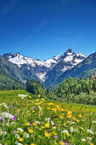 Obraz Alpen, Blumenwiese in den Bergen mit Schnee auf Gipfel - fototapety do salonu