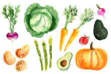 A Colored Sketch Of Vegetables...