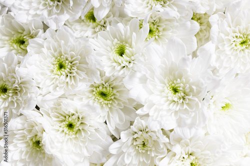 white flowers, closeup #316501371