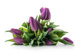 Fototapeta Tulipany - Bouquet of purple tulips isolated on white