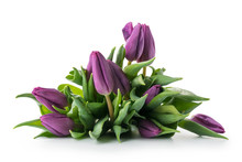 Bouquet Of Purple Tulips Isola...