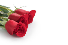Three Red Rose Isolated In White