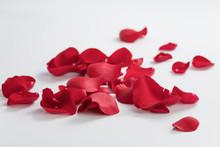 Red Rose Petals On White Backg...