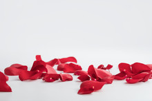 Red Rose Petals On White Backg...