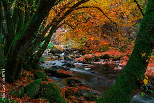 Flusslandschaft im Herbst Tablou Canvas