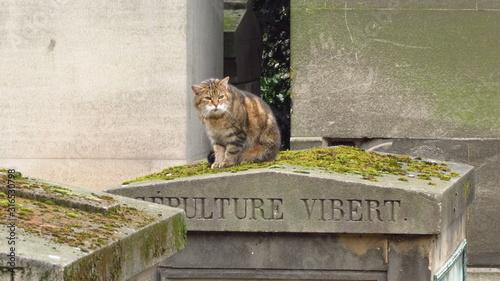 Fotografie, Tablou el gato esta de visita en pere la chaise cementerio