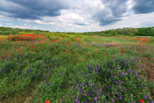 Cloudy Sky Field Of Wild Flowers / Natural Beauty Near The City