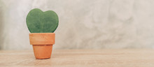 Hoya Kerrii Craib In Pot Plant...