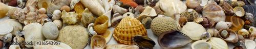 Fotomural  shells on the beach