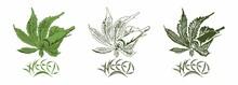 Vector Weed Leaf Keep Rolled