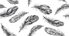 Hand Drawn Feather On White Ba...