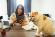 Sad Cat Ignore By Female Owner