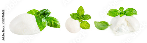 Fototapeta Mozzarella cheese Isolated. Traditional Italian Mozzarella ball and basil leaf on white background.  Italian food concept. obraz