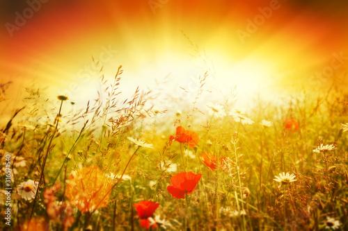 bright meadow - 316571540