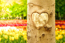 Tree With Heart In Spring