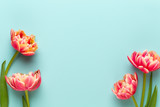 Fototapeta Tulips - Spring flowers, tulips on pastel colors background. Retro vintage style.