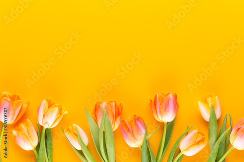Photo Yellow pastels color tulips on yellow background.