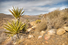 Plants Along The Trail In Joshua Tree National Park