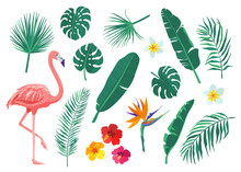 Tropical Leaves, Flowers Vecto...