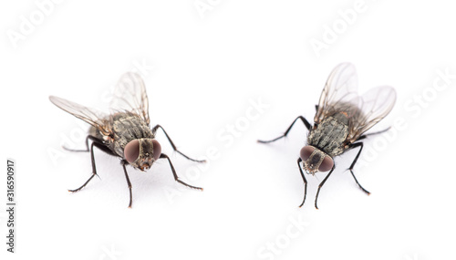 fly isolated on a white background