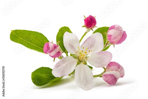 Fototapeta Apple Flowers obraz
