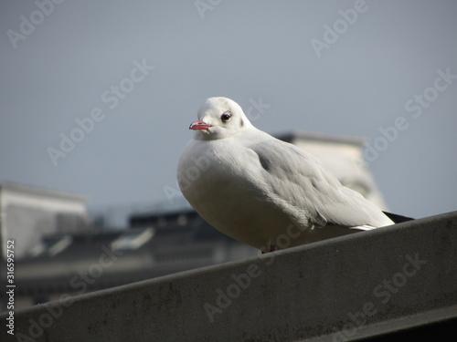 Samotny biały gołąb w wielkim mieście - fototapety na wymiar