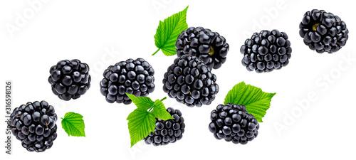 Cuadros en Lienzo Ripe blackberry isolated on white background