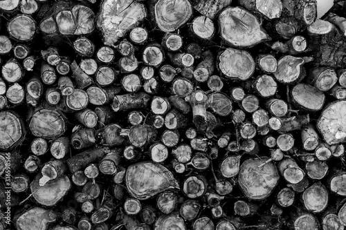 Fotografiet montaña de troncos apilados para leña en invierno en blanco y negro