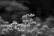 canvas print picture - Winter frozen plants