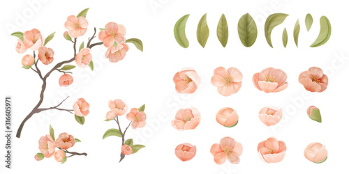 Obraz Cherry Flower Set Isolate on White Background. Pink Sakura Blossom, Green Leaves and Branches, Design Elements for Graphic Design Printable Banner, Poster or Flyers Decoration. Vector Illustration - fototapety do salonu