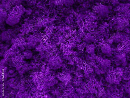 Violet moss in forest close-up - 316608509