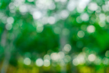 Nature Bokeh With Green Leaf I...