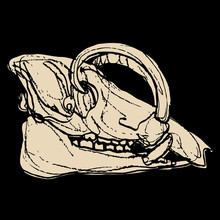 Isolated Vector Illustration. Skull Of Babirusa. Babyrousa Babyrussa. Monochrome Silhouette. Hand Drawn Rough Sketch.