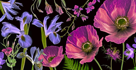 Fototapeta Do salonu three poppies, irises and other flowers on black background botanical art picture