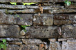 alte steinmauer und eine kleine eidechse