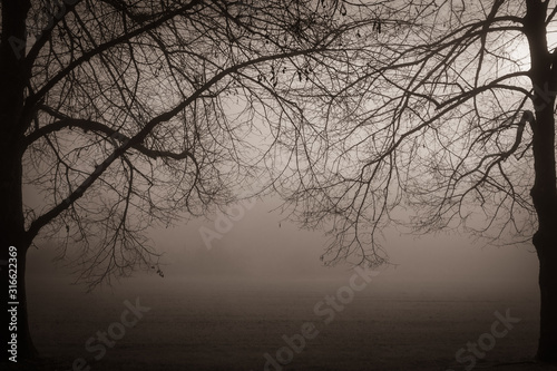 cold freezing winter atmosphere in black and white Wallpaper Mural