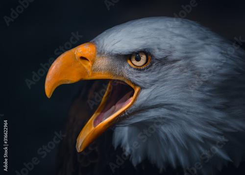 Photo Atmospheric Portrait of a Golden Eagle
