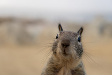 Portrait Of Squirrel On A Back...
