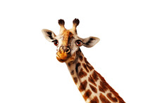 Happy Simple Isolated On White Head Portrait Of Giraffe With Long Neck