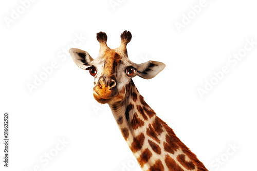 Happy simple isolated on white head portrait of giraffe with long neck Fototapeta
